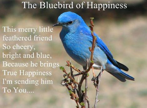 Free Gift Folded The Bluebird of Happiness